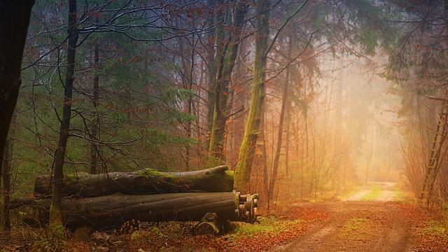Wandelkring – wandelen regio Bilthoven